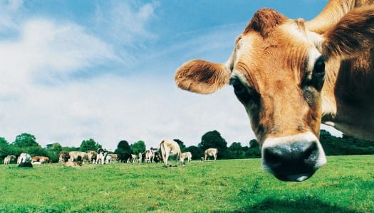 Dairy Alternatives: Gourmet Grazing Favourites!
