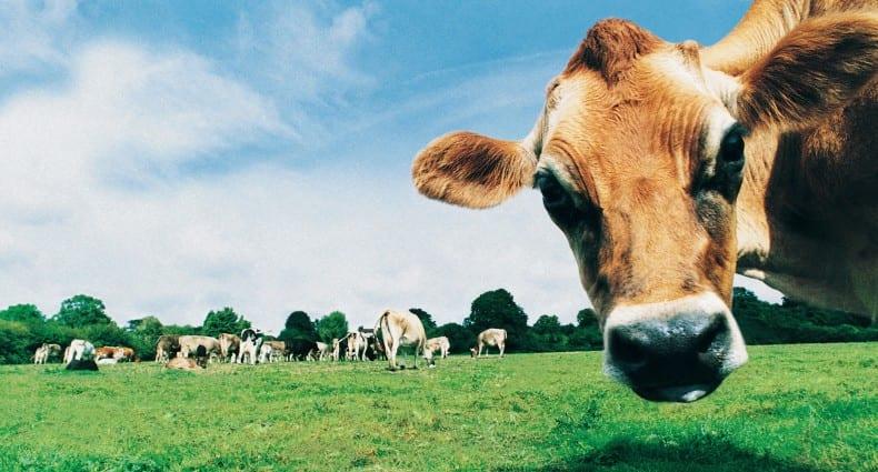 Dairy Alternatives: Gourmet Grazing Favourites!