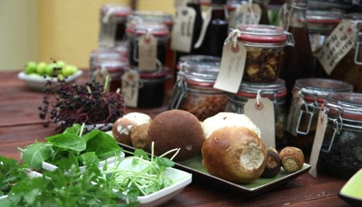 A Foraging Masterclass in Macreddin Village