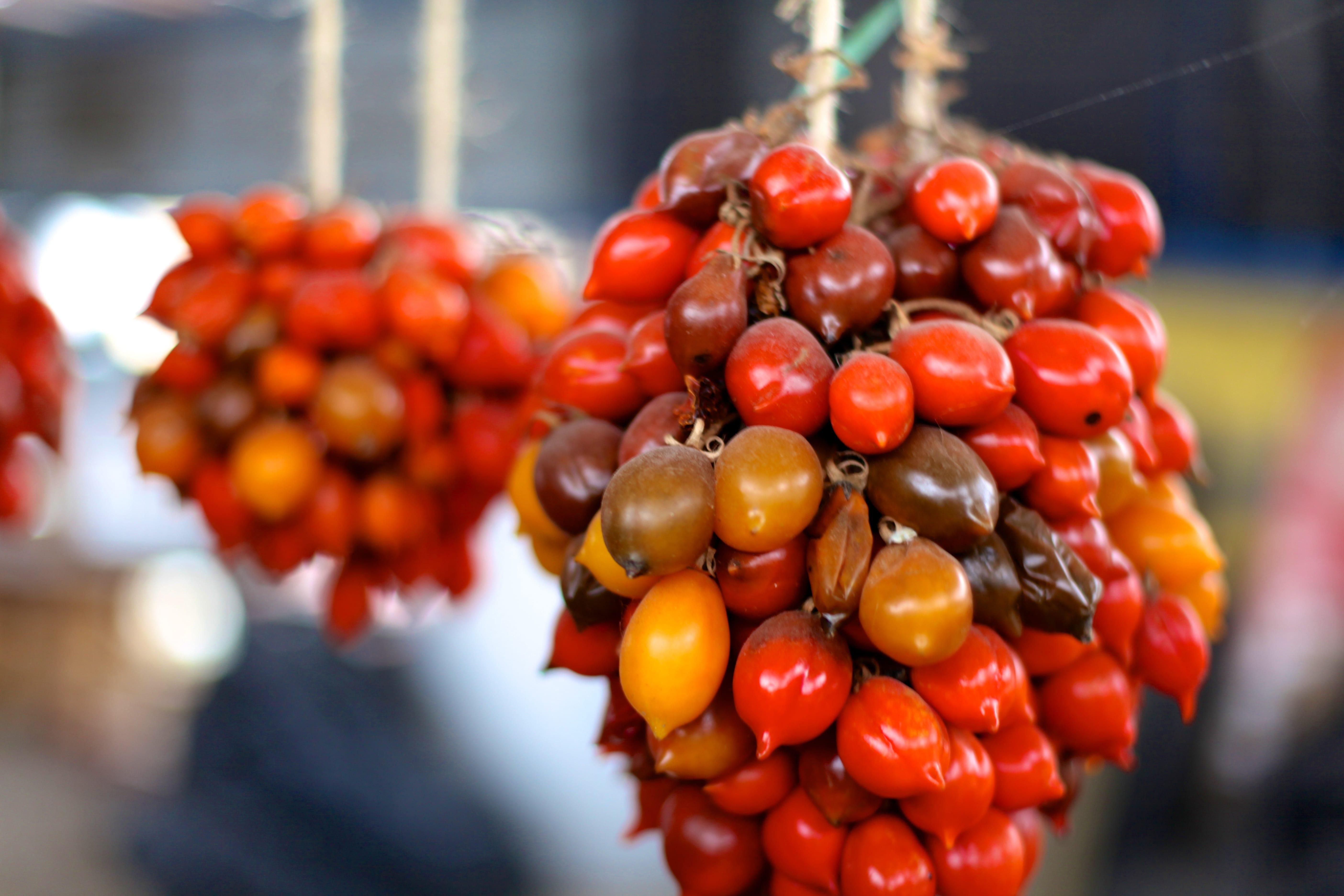 naples tomato farm